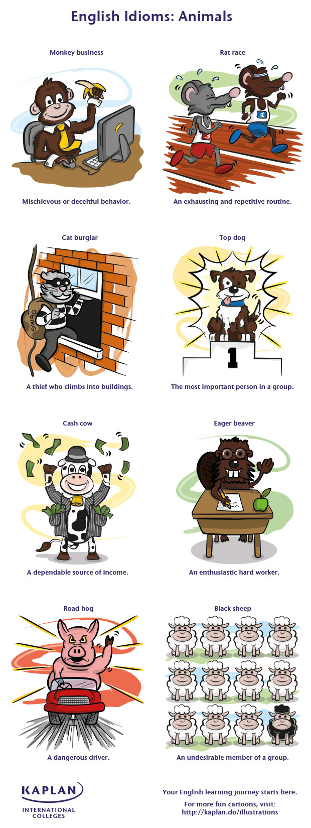8 Simple Animal Idioms That Will Make You a Better Communicator