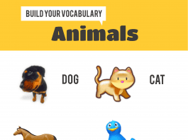 Animals Infographic