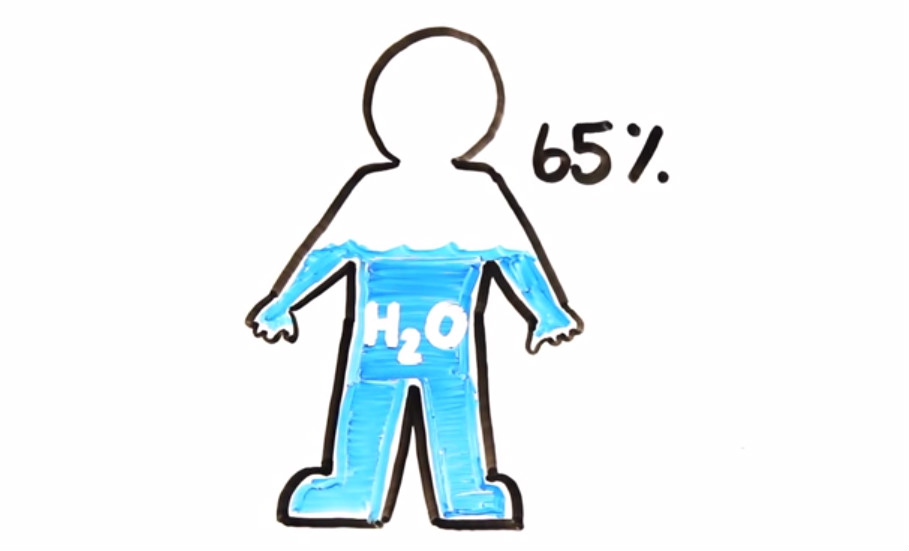 H20 is the most abundant molecule in the human body making up 65 of an adult
