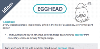 egghead definition