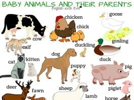 baby animals and their parents names