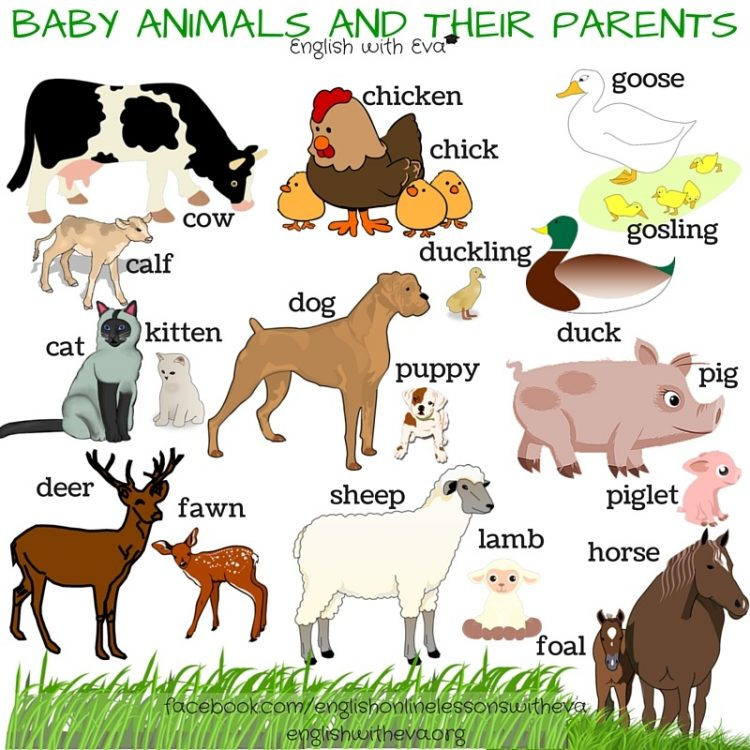 40 names of baby animals and their parents blog. Black Bedroom Furniture Sets. Home Design Ideas