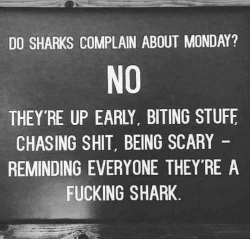 Do shark complain about Monday? NO. They're up early, biting stuff, chasing shit, being scary - reminding everyone the're a fucking shark