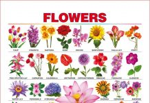 List of Flower Names